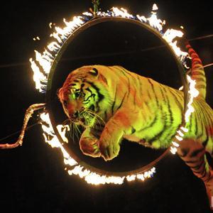 Цирки Алексина