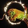 Цирки в Алексине